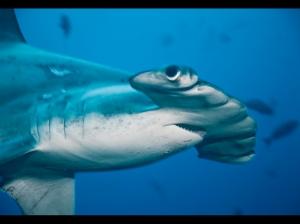 Cocos-Island-Expedition-2011.031