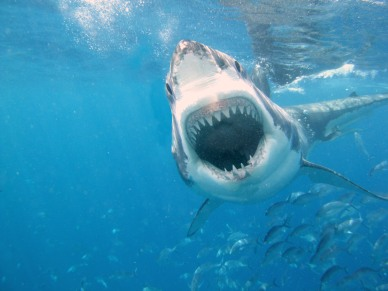 Image for a Guided Meditation | Shark Dreams