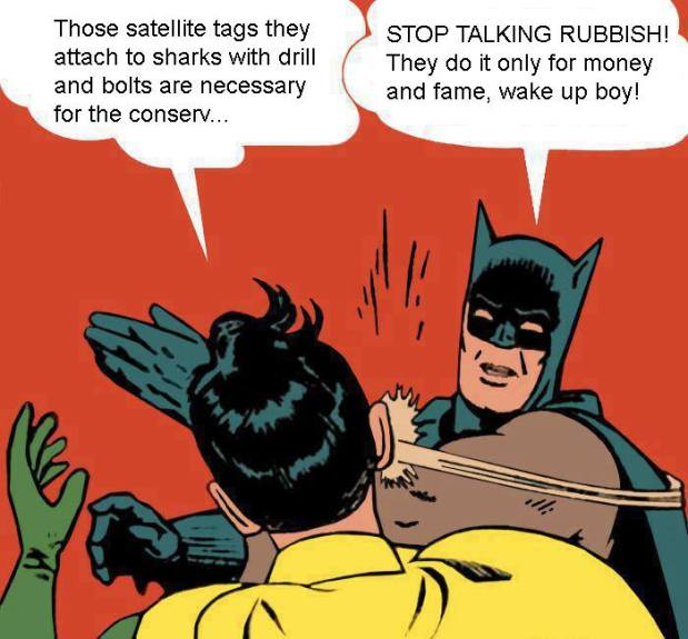Batman & Robin Discuss OCEARCH