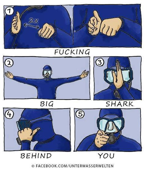 I wish I had learned these hand signals in diving class.
