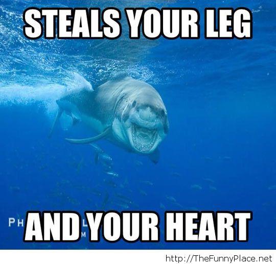 Day 189: 12/31/13: Eerie Smiling Shark