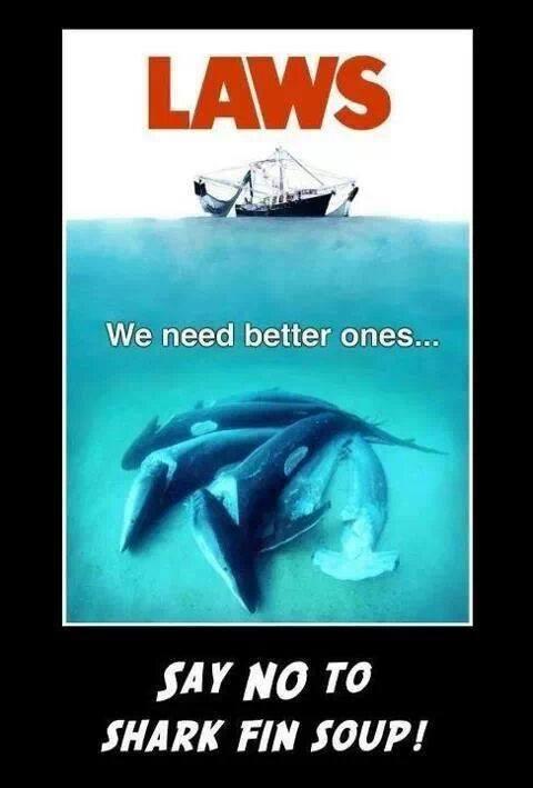 Day 224 2/4/14: 25% of Sharks & Rays Near Extinction