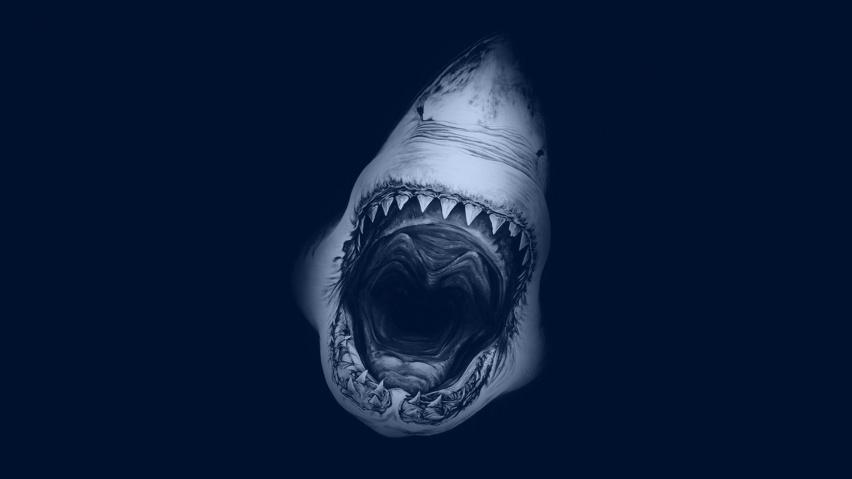 Shark Attack | Shark Dreams