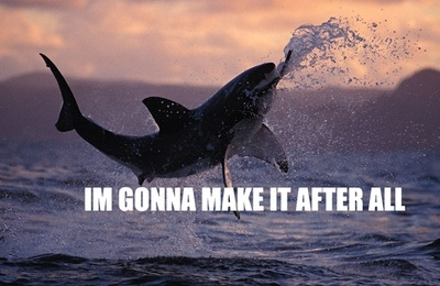 43-shark-memes-shark-week--large-msg-131232916114