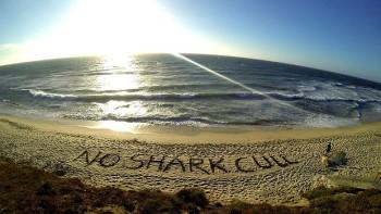 silent-shark-protest_729-620x349